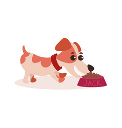 jack russell terrier character eating dog food out vector image vector image