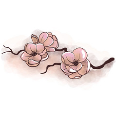 Jasmine flowers on a branch vector