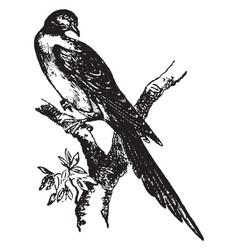 Passenger pigeon vintage vector