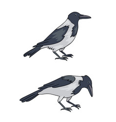 two grey crows vector image