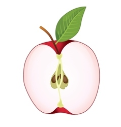 cut red apple vector image