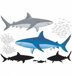 sharks and fish isolated images vector image