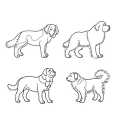 dogs different breeds in outlines set2 vector image