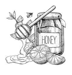 Honey with lemon and mint drawing jar vector