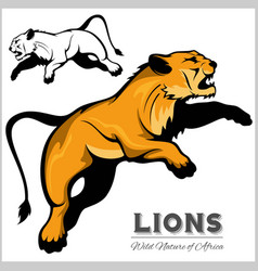 lioness isolated animal vector image