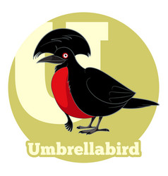abc cartoon umbrellabird vector image