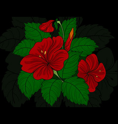 Chaba flowers hand drawing vector