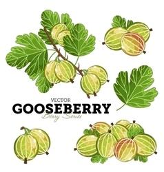 Gooseberry Set vector