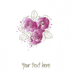 purple roses vector image
