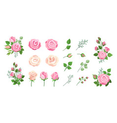 roses bouquets vintage floral decoration vector image