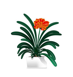 spotted plant in a white pot element of home vector image