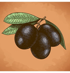 engraving olives retro vector image