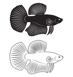 Rooster fish vector