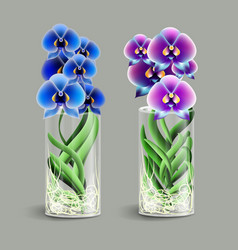 vanda orchid in a glass vase epiphyte tropical vector image