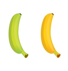 green and ripe banana vector image vector image
