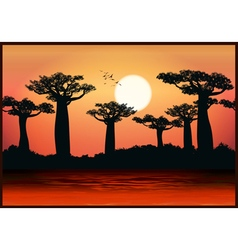 baobab trees vector image