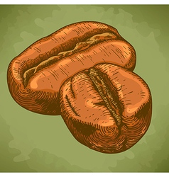 engraving two coffee beans retro vector image