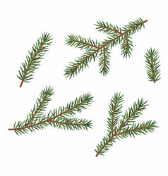 green branches a christmas tree set isolated vector image