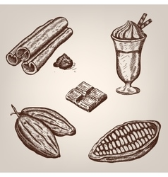 hand drawing cacao beans vector image