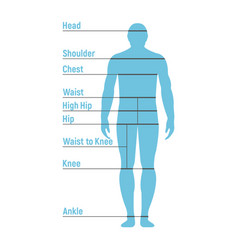 man size chart human front side silhouette vector image