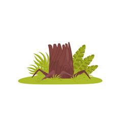 old stump element of tropical jungle forest vector image