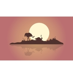 Silhouette of two Ostrich and reflection scenery vector image