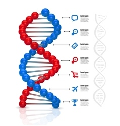 Dna infographics vector image