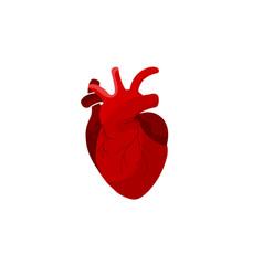 Creative medicine concept anatomical human heart vector