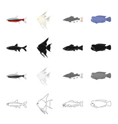 different types of aquarium and marine fish scaly vector image