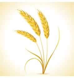 Ears of barley vector