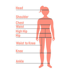 girl size chart human front side silhouette vector image