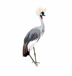 Japanese crane bird isolate on a white background vector