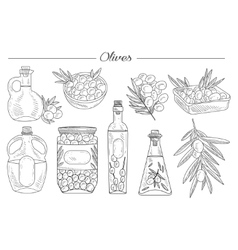 Olive oil handdrawn set vector