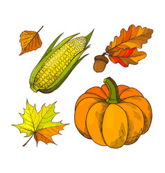 pumpkin and acorns autumn isolated icons vector image