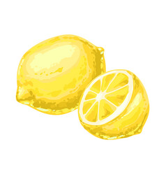 ripe lemon and slice vector image
