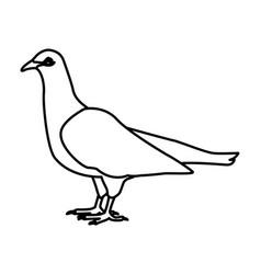 white dove bird vector image