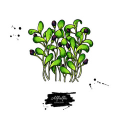Alfalfa sprouts heap drawing kai wah-rei vector
