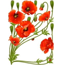 Frame with red poppies and ladybug vector