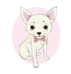 girl chihuahua print cute fashionable dog sketch vector image