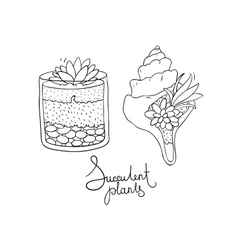 glass terrariums and the seashell with vector image