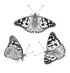 hand drawn sitting butterflies set vector image