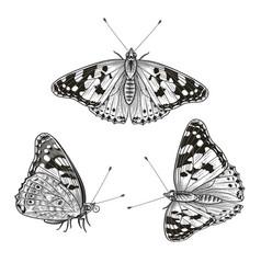 Hand drawn sitting butterflies set vector