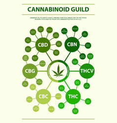 Cannabinoid guide vertical infographic vector