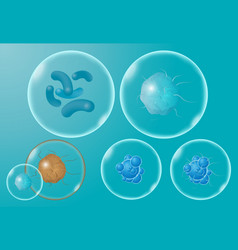 realistic microscopic viruses and bacteria vector image
