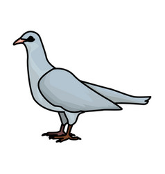 white dove bird vector image