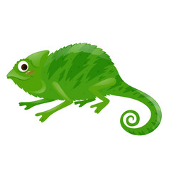 wild iguana on white background vector image