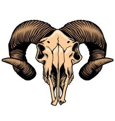 Goat head skull vector