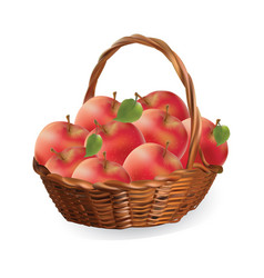 basket with apples harvest apples vector image
