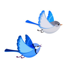 Flying splendid fairy wren pair isolated vector