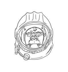 Gorilla head in spaceman helmet hand drawn vector